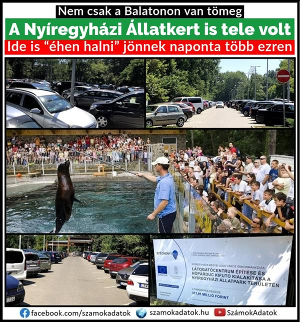 Thousands of people at the Nyíregyháza Zoo: deep poverty is raging